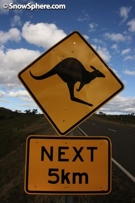 the classic roo road sign